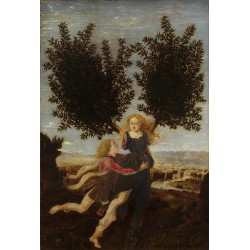 Apollo and Daphne,Piero del...